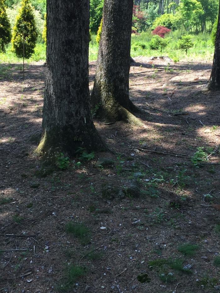 숲에서 배우다_Image 3.jpg
